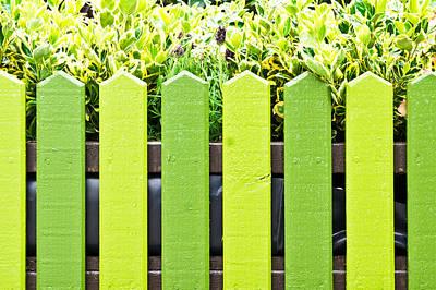 Picket Fence Print by Tom Gowanlock