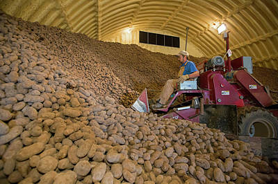 Food Stores Photograph - Potato Farming by Jim West