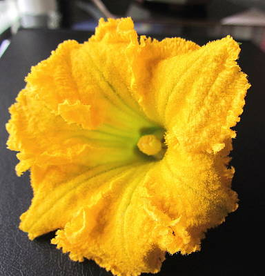 Photograph - Pumpkin Flower by Joyce Woodhouse