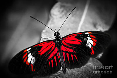 Red Heliconius Dora Butterfly Print by Elena Elisseeva