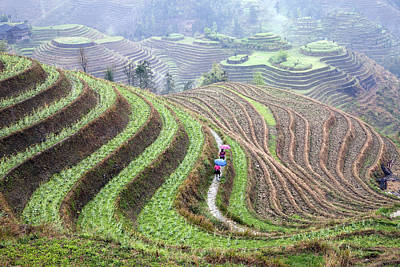 Farm Scene Photograph - Rice Terraces by King Wu