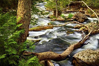 Creek Photograph - River Rapids by Elena Elisseeva