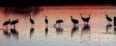 Cranes Photograph - Sandhill Cranes by Steven Ralser