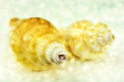 Sea Shells Original by Toppart Sweden