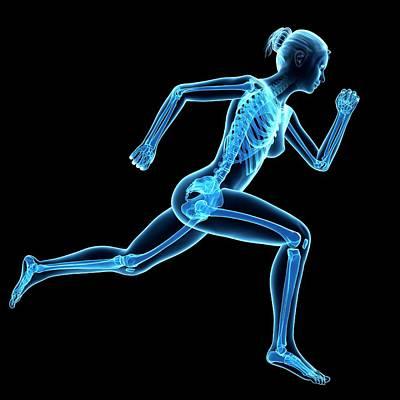 Jogging Photograph - Skeletal System Of Jogger by Sebastian Kaulitzki