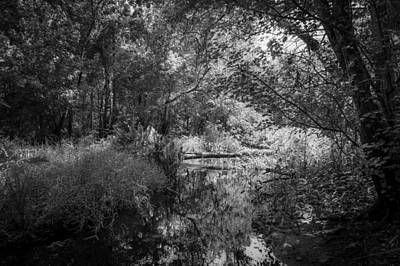 Cypress Swamp Photograph - Soldiers Creek Seminole County Florida  Bw by Rich Franco