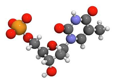 Deoxyribonucleic Acid Photograph - Thymidine Monophosphate Molecule by Molekuul