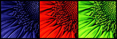 Macro Digital Art - 3 Tile Sunflower Colors by Mark Kiver