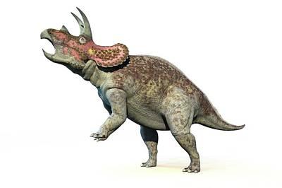 Triceratops Dinosaur Print by Roger Harris