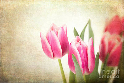 Tulips Vintage Print by Jane Rix