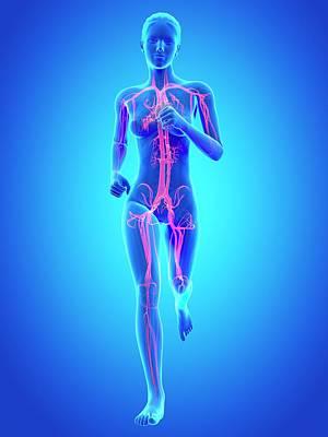 Vascular System Of A Runner Print by Sebastian Kaulitzki