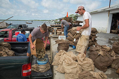 Florida Panhandle Photograph - Weighing Harvested Oysters by Jim West