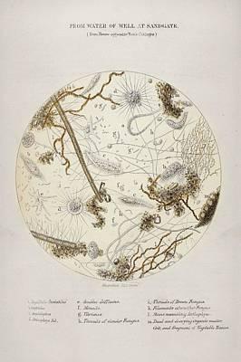 Cholera Epidemic Research Print by British Library