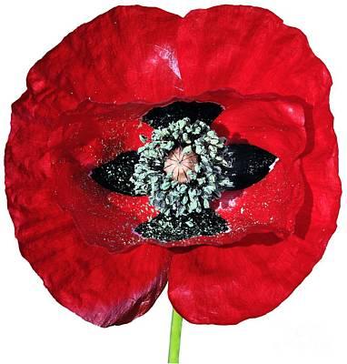 Paint Painting - Poppy Flower by George Atsametakis