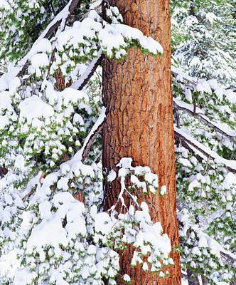 Fir Trees Photograph - Usa, California, Sierra Nevada Mountains by Jaynes Gallery