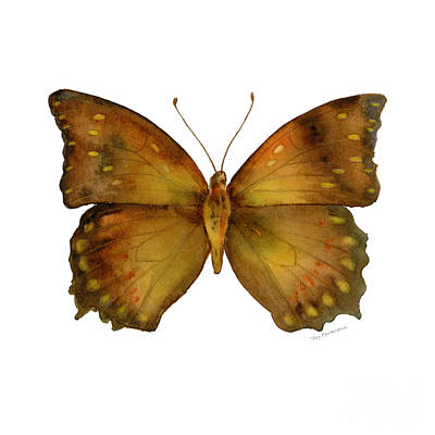 34 Charaxes Butterfly Print by Amy Kirkpatrick