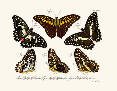 Lime Drawing - Butterflies by Splendid Art Prints