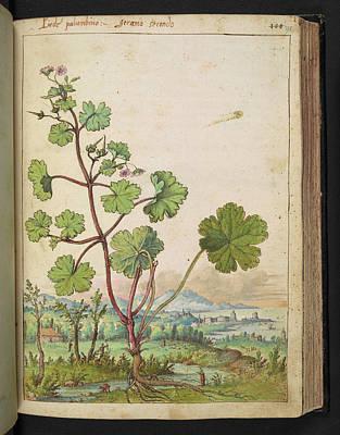 Gathering Photograph - Medicinal Plant by British Library