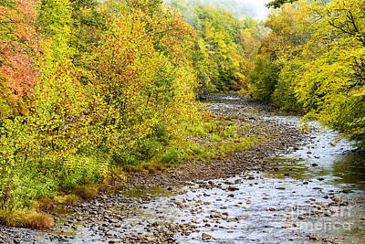West Fork Photograph - Williams River Autumn by Thomas R Fletcher