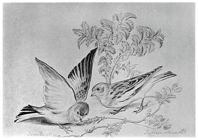 Blackburn Birds, 1895 Print by Granger