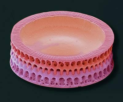 Diatoms Photograph - Diatom by Steve Gschmeissner