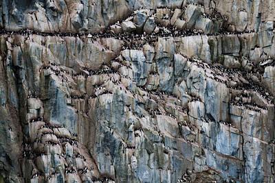 Norway, Svalbard Print by Jaynes Gallery