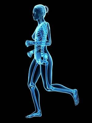 Skeletal System Of Runner Print by Sebastian Kaulitzki