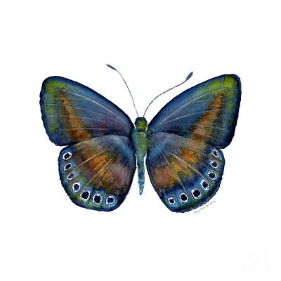 White Background Painting - 39 Mydanis Butterfly by Amy Kirkpatrick