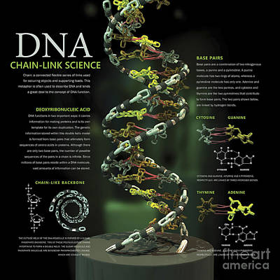 3d Poster Illustration Of Dna Print by Nicholas Mayeux