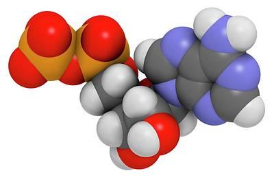 Adenosine Photograph - Adenosine Diphosphate Molecule by Molekuul