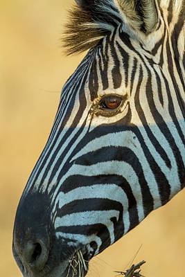Africa, South Africa, Londolozi Private Print by Jaynes Gallery