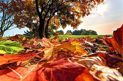 Branch Photograph - Autumn Fall Landscape In Park by Michal Bednarek