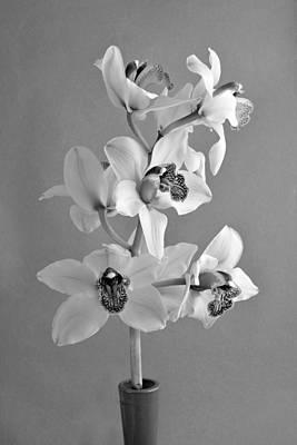 European Photograph - Black And White Beauty by George Atsametakis