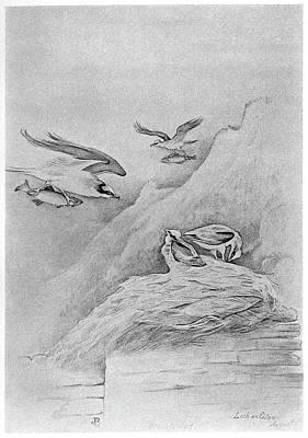 Osprey Drawing - Blackburn Birds, 1895 by Granger
