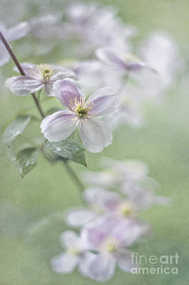 Floral Photograph - Breathing Light by Maria Ismanah Schulze-Vorberg