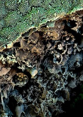 Broccoli Print by Stefan Diller