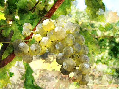 Poster Painting - Cabernet Grapes by MotionAge Designs