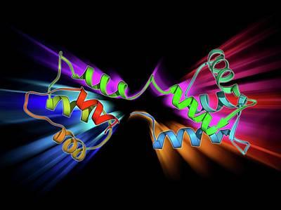Molecular Structure Photograph - Calcium-binding Protein Molecule by Laguna Design