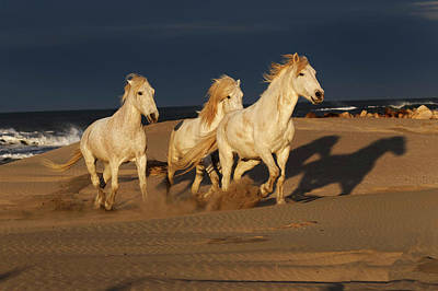 Adam Photograph - Camargue Horse On Beach At Sunrise by Adam Jones