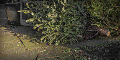 Christmas Tree Unadorned On The Street Print by Thomas Olbrich