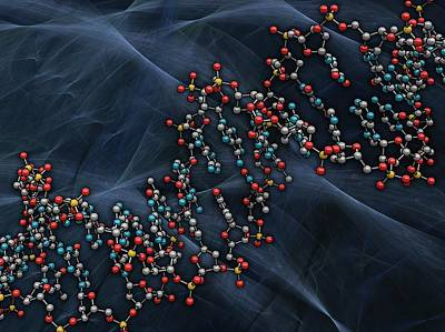 Dna (deoxyribonucleic Acid) Print by Laguna Design