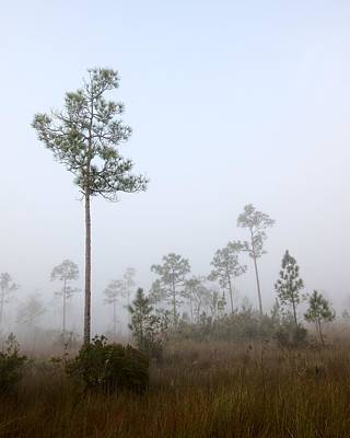 Slash Photograph - Early Morning Fog Landscape-5 by Rudy Umans