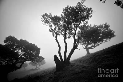 Fanal Photograph - Florestal Fanal by Geir Kristiansen