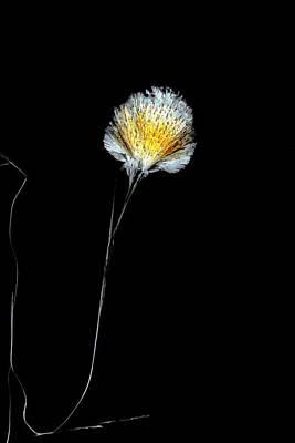 Mental Photograph - Fluoxetine Drug by Antonio Romero
