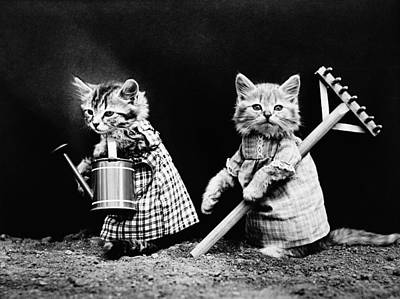 Cats Photograph - Frees Kittens, C1914 by Granger