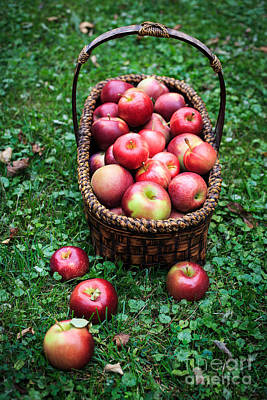 Fresh Picked Apples Print by Edward Fielding