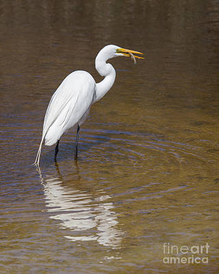 Great Egret Print by Twenty Two North Photography