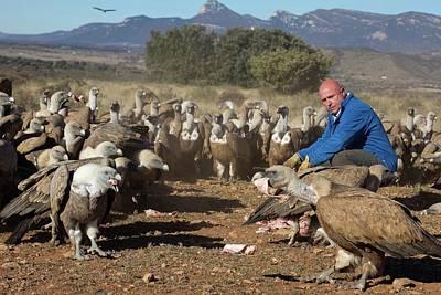 Griffon Photograph - Griffon Vulture Conservation by Nicolas Reusens