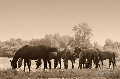 Fields Photograph - Horses On The Field by Michal Bednarek