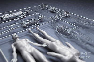 Human Cloning Print by Science Picture Co